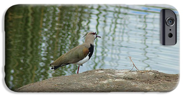 Lapwing iPhone Cases - Southern Lapwing on a Lake Shore iPhone Case by Robert Hamm