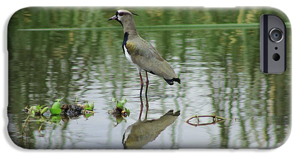 Lapwing iPhone Cases - Southern Lapwing iPhone Case by Robert Hamm