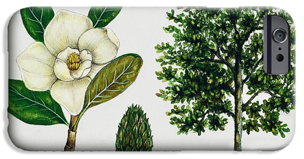 Flora Drawings iPhone Cases - Southern magnolia or Bull bay  iPhone Case by Unknown