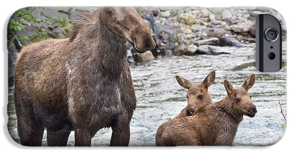 Innocence iPhone Cases - Sow Moose And Calves At Waterton iPhone Case by Richard Wear