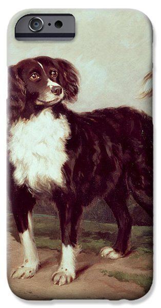 Working Dogs iPhone Cases - Spaniel iPhone Case by JW Morris