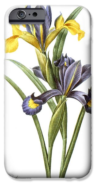 1833 Photographs iPhone Cases - Spanish Iris iPhone Case by Granger