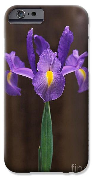 Xiphium iPhone Cases - Spanish Iris iPhone Case by Greg Vaughn - Printscapes