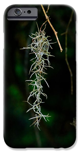 Nature Abstracts iPhone Cases - Spanish moss iPhone Case by Roger Reeves  and Terrie Heslop
