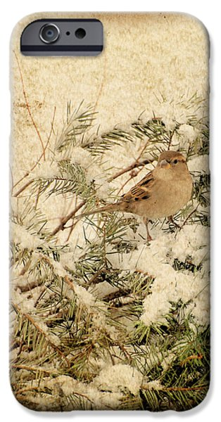Sparrow In Winter I - Textured iPhone Case by Angie Tirado