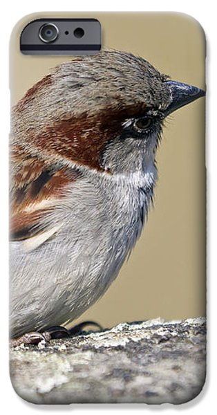 Sparrow iPhone Case by Melanie Viola