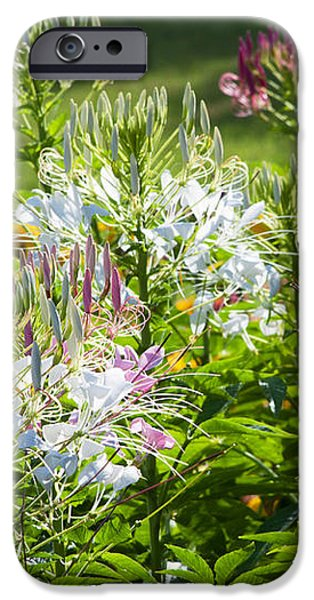 Formal iPhone Cases - Spider Flower iPhone Case by Atiketta Sangasaeng