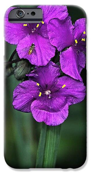 Fauna iPhone Cases - Spiderwort Flower iPhone Case by Marcia Colelli