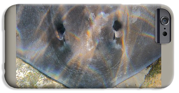 Freedmen iPhone Cases - Spiracle - Sting Ray Head iPhone Case by Jason Freedman