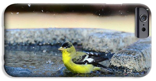 Pleasure iPhone Cases - Splish Splash I Am Taking A Bath iPhone Case by Debby Pueschel
