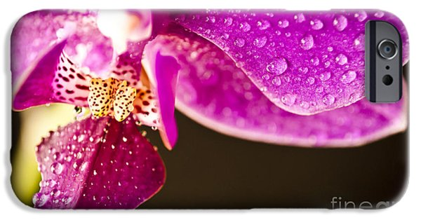 Nature Abstract iPhone Cases - Split Orchid II iPhone Case by Danny Pugh