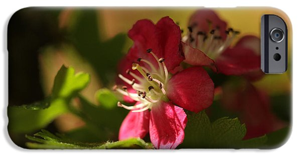 Energize iPhone Cases - Spotlight On Hawthorn iPhone Case by Connie Handscomb