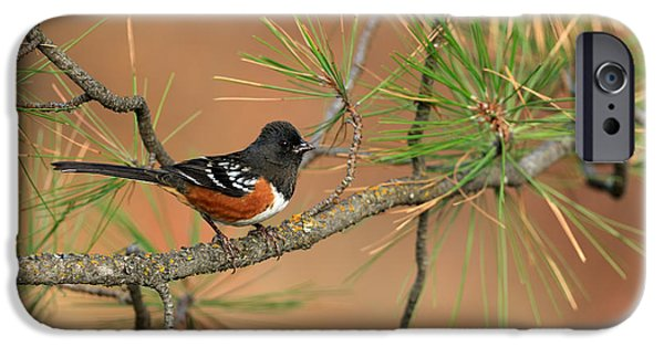 Birds iPhone Cases - Spotted Towhee iPhone Case by Reflective Moment Photography And Digital Art Images