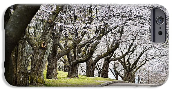 Apple Trees iPhone Cases - Spring apple orchard iPhone Case by Elena Elisseeva