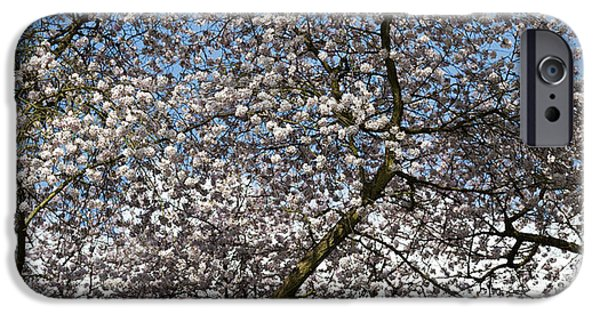 Rosaceae iPhone Cases - Spring Beauty iPhone Case by Tim Gainey