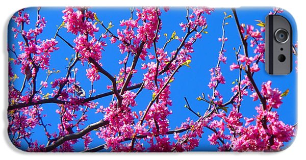 Floral Photographs iPhone Cases - Spring Blossoms iPhone Case by Hikari Suk