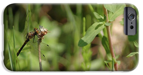 Nature Center Pond iPhone Cases - Spring Dragonfly iPhone Case by LeeAnn McLaneGoetz McLaneGoetzStudioLLCcom