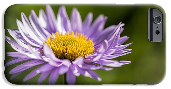 Disc iPhone Cases - Spring fleabane  iPhone Case by Yves Gagnon