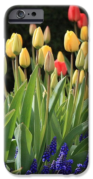 Spring Garden iPhone Case by Carol Groenen