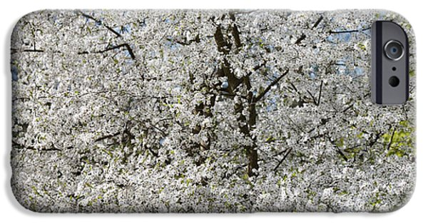 Rosaceae iPhone Cases - Spring Glory iPhone Case by Tim Gainey