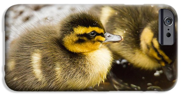 Baby Bird iPhone Cases - Spring is here iPhone Case by Chris Whittle