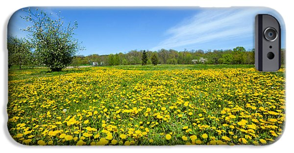 Morning iPhone Cases - Spring meadow full of dandelions flowers and green grass iPhone Case by Michal Bednarek