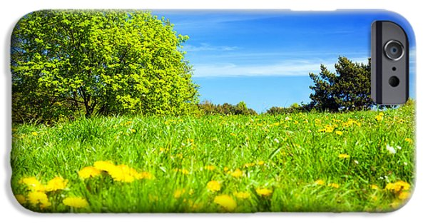 Morning iPhone Cases - Spring meadow with green grass iPhone Case by Michal Bednarek