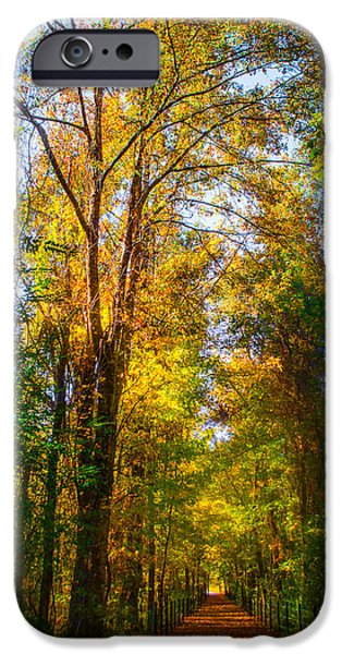 Green Path iPhone Cases - Spring Path iPhone Case by Parker Cunningham