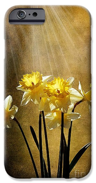 Spring Sun iPhone Case by Lois Bryan