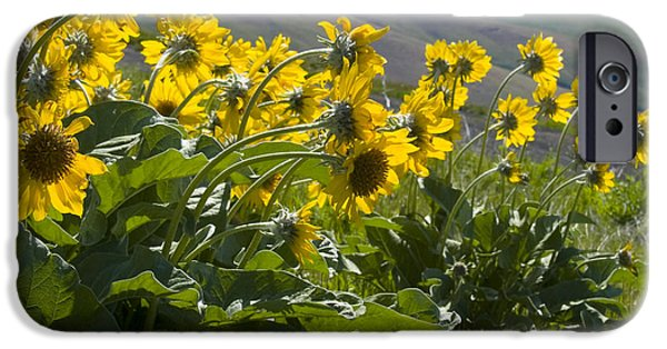 Lewiston iPhone Cases - Spring Sunflowers iPhone Case by Idaho Scenic Images Linda Lantzy