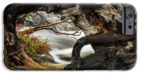 Raining iPhone Cases - Spring Textures iPhone Case by Mike  Herron