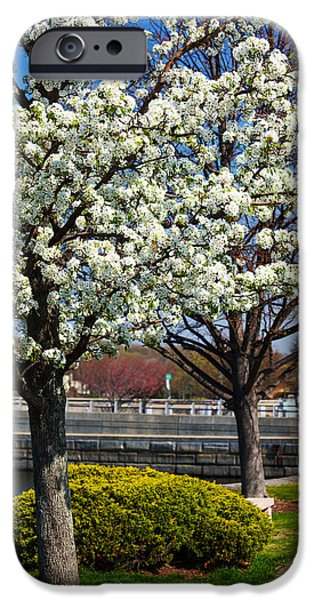 Springtime In The Park iPhone Cases - Spring Time In Westport iPhone Case by Karol  Livote