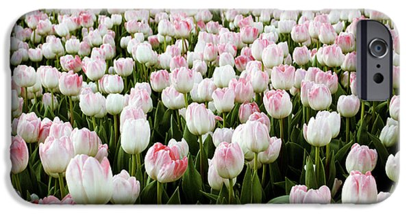Denmark iPhone Cases - Spring Tulips iPhone Case by Linda Woods