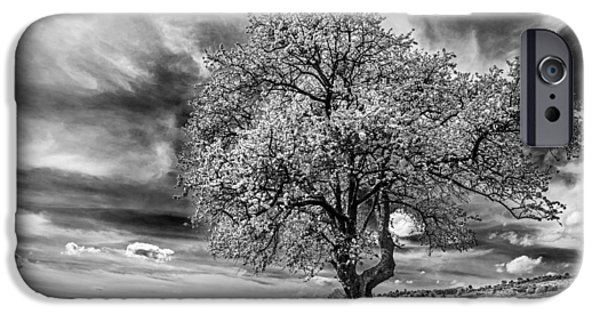 Springtime iPhone Cases - Springfield iPhone Case by Ivan Vukelic