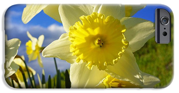 Floral Photographs iPhone Cases - Springtime Bright Sunny Daffodils Art Prints iPhone Case by Baslee Troutman