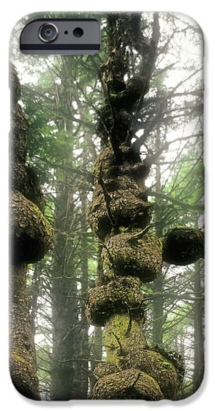 Abnormal iPhone Cases - Spruce Burl Olympic National Park Beach 1 WA iPhone Case by Christine Till