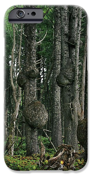 Spruce Burls Olympic National Park WA iPhone Case by Christine Till