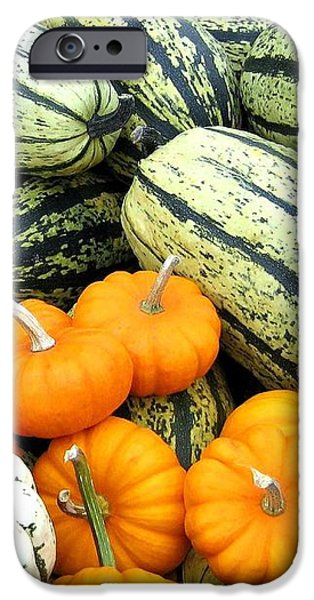 Squash Harvest iPhone Case by Will Borden