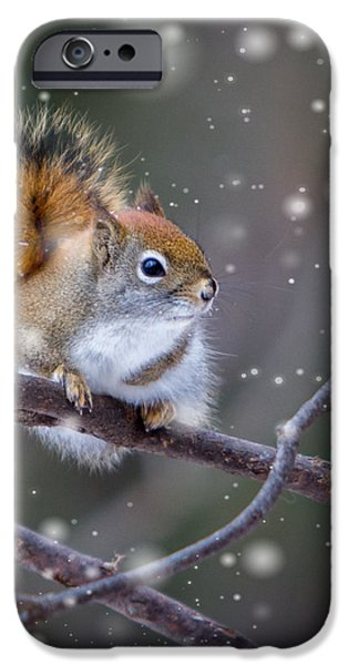Gray Hair iPhone Cases - Squirrel Balancing Act iPhone Case by Patti Deters