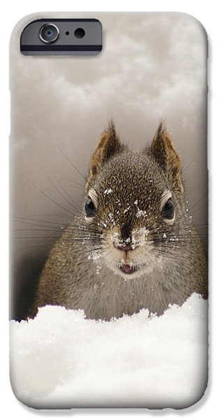 Snowy iPhone Cases - Squirrel In A Snow Tunnel iPhone Case by Stanza Widen