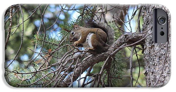 Pines iPhone Cases - Squirrel In A Tree iPhone Case by Lorraine Baum