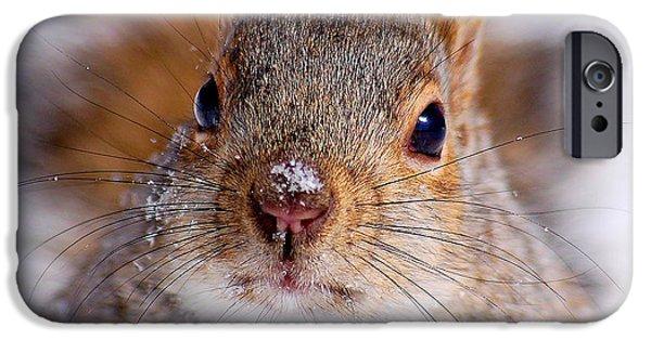 Sciurus Carolinensis iPhone Cases - Squirrel portrait iPhone Case by Mircea Costina Photography