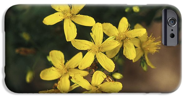 Antidepressant iPhone Cases - St. Johns Wort Plant iPhone Case by George Mattei