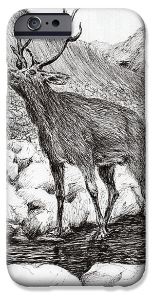 Nature Study Drawings iPhone Cases - Stag iPhone Case by Vincent Alexander Booth