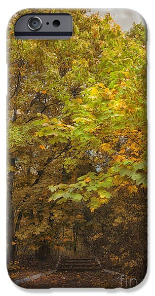 Nature Abstract iPhone Cases - Stairs in the nature iPhone Case by SK Pfphotography