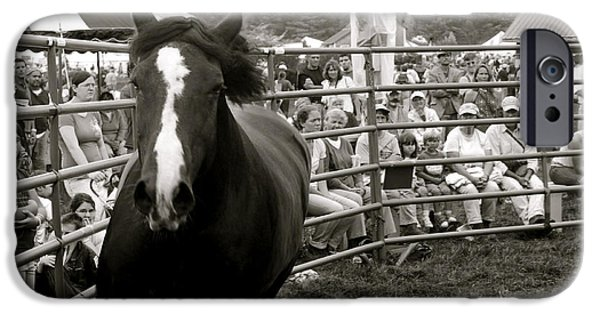 Agriculture iPhone Cases - Stallion iPhone Case by John Meader