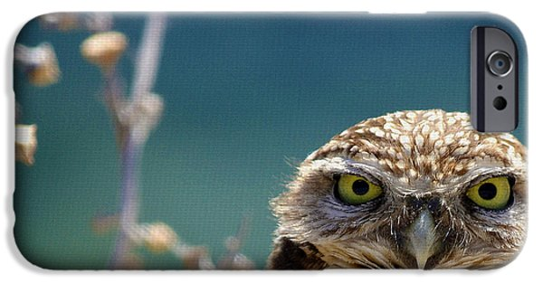 Owls iPhone Cases - Standing My Ground Deux iPhone Case by Fraida Gutovich