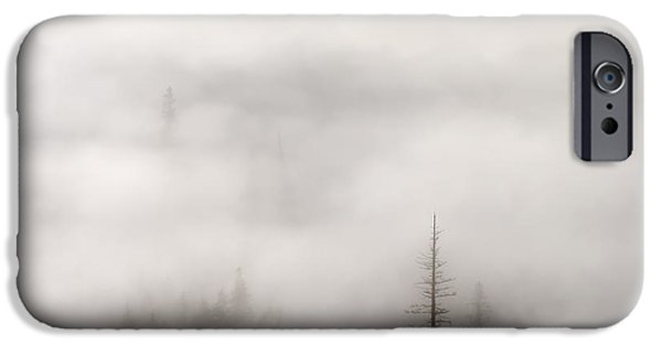 Tall Trees iPhone Cases - Standing Tall iPhone Case by Mike  Dawson