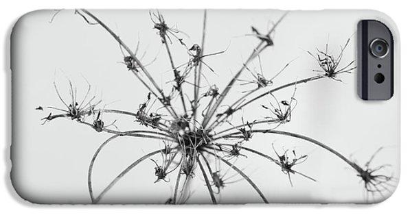 Wintertime iPhone Cases - Star iPhone Case by Gabriela Insuratelu
