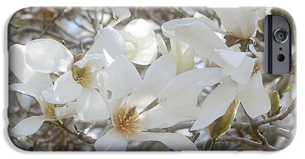 Indiana Springs iPhone Cases - Star Magnolia Blossoms iPhone Case by Sandy Keeton